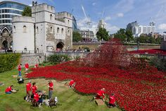 """Volunteers install porcelain poppies as part of the art installation """"Blood Swept Lands and Seas of Red"""" by ceramic artist Paul Cummins and theatre stage designer Tom Piper marking the centenary of the start of World War 1 at the Tower of London in London on August 3, 2014"""
