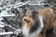 Winter wanderlust http://ift.tt/2Djbqqd