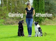 Gaining your herding breed dog's attention will take practice, patience and a lot of hard work, but Guild Evangelist Kris Crestejo tells us the results will be well worth it in the long run. Check out her detailed steps to gaining your dog Dog Agility, Dog Training Tips, Training Pads, Training Videos, Training Equipment, Leash Training, Agility Training, Training Schedule, Toilet Training