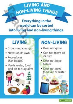 Living and Nonliving Things Poster 1st Grade Science, Primary Science, Kindergarten Science, Science Classroom, Teaching Science, Science Education, Teaching Resources, Teaching Time, Preschool Education