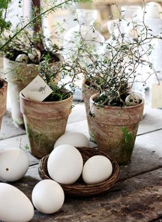 Pretty Spring decor with pots and eggs... whitewash terra cot pots and glue on some moss