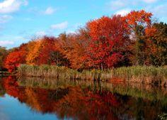 Long Island, NY Genealogy site