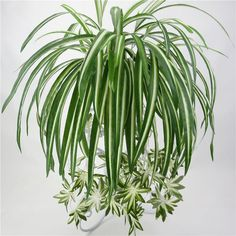Easy Plants To Grow, Fake Plants, Hanging Plants, Indoor Plants, Plant Wall, Plant Decor, Spider Plant Babies, Airplane Plant, Fake Walls