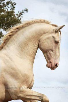 (97) Zaplątani w końskich grzywach - Photos
