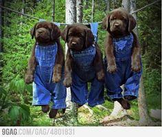 Too cute!  Drip Dry Dogs