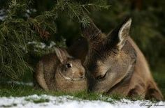 real bambi thumper - Google Search