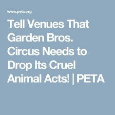 Tell Venues That Garden Bros. Circus Needs to Drop Its Cruel Animal Acts! | PETA