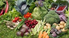 Grădină de 100 mp cu legume ecologice, suficiente pentru o familie Salvia, Sprouts, Cabbage, Home And Garden, Tropical, Organic, Vegetables, Gardening, House