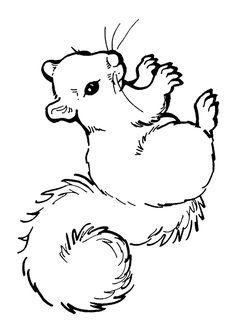 eekhoorn tekening - Google zoeken