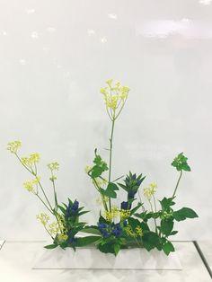 ●Japanese anemone●
