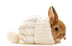 It is a bunny in a hat