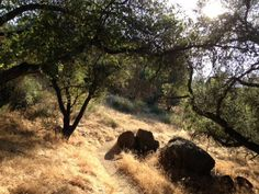 """""""Nobody Hikes in LA"""" Blog on all the hikes in Southern California. Oaks on the Highland Valley Trail"""