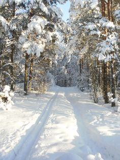🇫🇮 Skiing track in the forest in Rauma // skiing track in a snowy forest in Rau . - 🇫🇮 Ski trail in the forest in Rauma // skiing track in a snowy forest in Rau . - Moja strona kwiat drogi 🇫🇮 Skiing track in the for I Love Winter, Winter Is Coming, Winter Snow, Winter Christmas, Snowy Forest, Winter Scenery, Snowy Day, Snow Scenes, Winter Beauty