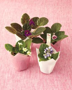 Petite African-violet pots with a personalized tag. One of my Mommy's favorite flowers.