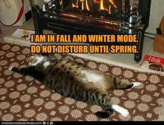 20 Cute and Funny Animal Fall Pictures You'll Love More than PSL #fallmemes #cutememe #cuteanimals #funnyanimals #animalmemes Silly Cats, Crazy Cats, Cats And Kittens, Cute Cats, Funny Animal Videos, Funny Animals, Cute Animals, Pet Day, Cat Boarding