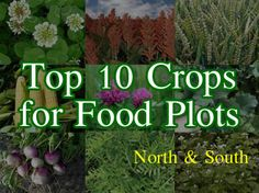 Learn the top crops to plant in North or Southern US. Very detailed charts that are great to print.