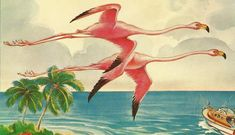 Flamingos in Flight Florida Florida's Graceful Flamingos And Their Young Colorful Flamingos Vintage Florida, Old Florida, Florida Girl, Florida Trips, Flamingo Art, Pink Flamingos, Flamingo Gifts, Vintage Cards, Vintage Postcards