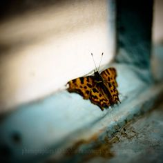 butterflies are natures promise