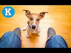¿Por qué mi perro me mira fijamente? - YouTube