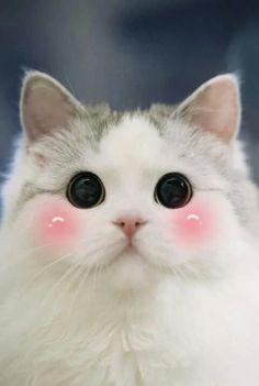 Ideas Eye Black Kittens For 2019 Cute Kittens, Cute Baby Cats, Cute Funny Animals, Cute Baby Animals, Animals And Pets, Funny Cats, Black Kittens, Pretty Cats, Beautiful Cats