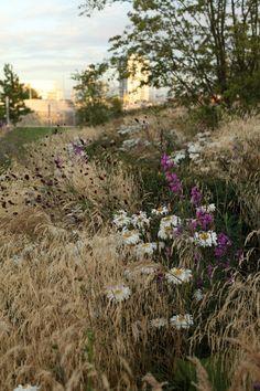 Olympic Park. Olympic gardens Europe. Sarah Price.