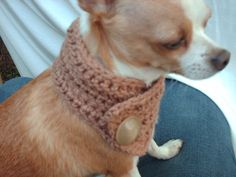 pet cowl- OMG!  I know a yorkie that would look so stylin' in this!  But in pink of course, or something else girly =)