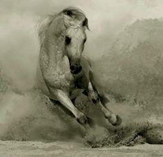 #letthehorsesrunfreeandwild