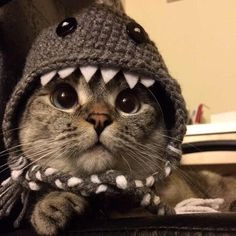 I'm a shark! www.nalacat.com