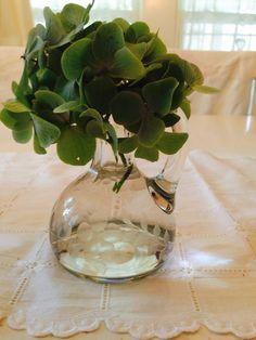 tiny hydrangea