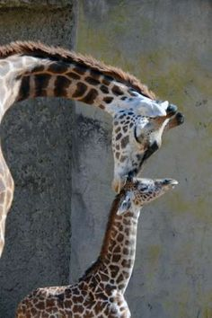 Baby animals and their moms - Santa Barbara Zoo, Sheri Horiszny/AP Photo