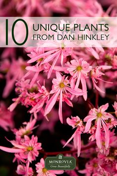 Vibrant foliage, drought-tolerance, and an easy-care are hallmarks of the plants in the Dan Hinkley collection from Monrovia. This collection is comprised of unique shrubs, grasses, and herbaceous perennials that offer months of beauty with minimal effort.