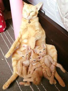Awww! Cute kitty family ♥ DancingPetNaturalProducts.com