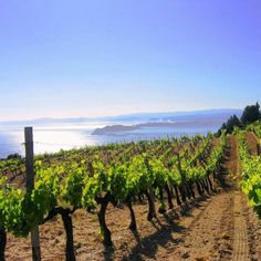 "Mount Athos, Greece Assyrtiko, Limnio & Cabernet #wine ""@DrinkGreekWine: Pure beauty...! ""@TSANTALI_wines #winelover pic.twitter.com/etzBAzgHsQ"""