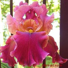 Love this! IrisMart with lots of reasonably priced, pretty bearded irises