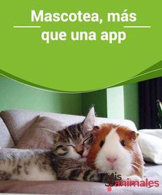 Mascotea, más que una #app  Las apps están a la orden del día y algunas de las más #buscadas son aquellas dedicadas a los animales. Todo lo que nos facilite la vida, incluida la #convivencia con nuestras mascotas, es siempre bienvenido. Hoy te hablamos de Mascotea, algo más que una app.