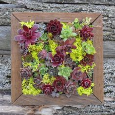 Succulent Vertical Living Wall Art Kit 12 by TheSucculentJungle, $65.00