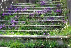 purple, white and green on stone stairs Champs, Garden Stairs, Stone Stairs, Stairway To Heaven, Enchanted Garden, My Secret Garden, Dream Garden, Garden Inspiration, Garden Ideas