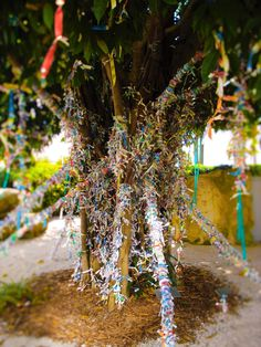 """The Dali Wish Tree / Salvador Dali Museum in St. Petersburg, Florida / """"This wish tree, streaming with ribbons, carries the wishes of our visitors & community. We invite you to contribute a wish to the tree, and to be part of the cultural tradition that extends back to Hindu & Scottish rites. In all its forms, the wish tree invites and holds our fond hopes."""" Photo credit: Cancerinmythirties.com"""