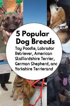 Dogs Smile Selfie Retriever German Shepherd Satin Chrome Plated Metal Money Clip