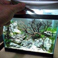 Lilliput www.ibrio.it your aquarium born here ! il tuo acquario nasce qui ! https://www.facebook.com/ibrio.it #acquario #acquari #acquariologia #acquariofilia #aquarium #aquariums #piante #natura #pesci #zen #design #arredamento #layout #layouts #layoutdesign #roccia #roccie #ibrio #moss #freshwater #plantedtank #aquadesignamano #tropicalfish #fishofinstagram #aquaticplants #natureaquarium #nanotank #reefkeeper #nanoreef #saltwateraquarium