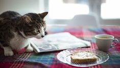 The short answer is yes, cats can eat bread, but there are some exceptions and things you should know before you share any bread with your kitty. Pet News, Curious Cat, Cat Facts, Cat Health, Domestic Cat, Funny Animal Pictures, Cat Food, Cat Breeds, Animal Shelter