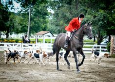 The Monmouth County Hunt, Freehold NJ
