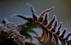 https://flic.kr/p/21otssV | Frost on the ferns | The autotags are interesting!