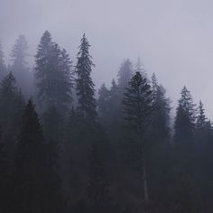 Köd előttem, köd utánam!  ☁ #erdély #székelyföld #transilvania #köd #erdővidék #erdő #forest #wald #naturliebe #naturelove #wunderfulnature #naturephotography #natrephoto #nature #természetfotó #természet #termeszet #hikinglife #hikingdays #hiking #turatajolo #tura