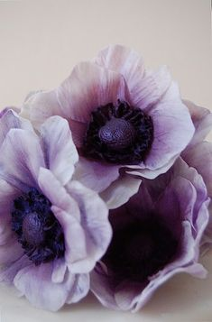 purple anemones - like the lighter color ones mixed with the very dark ones