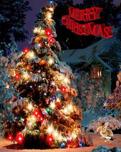 Merry Christmas Gif, Christmas Tree, Vote Sticker, Gif Photo, Tumblr Image, Pictures Images, Photos, Facebook Image, Waves