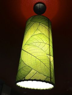 A house plant lights up...decoupaged leaves on a simple lampshade...delish!