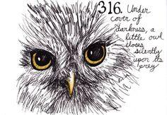 316. Little Owl