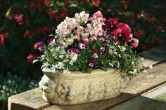 A stately fall/early winter container design filled with Snapdragon Snapshot Plum Blossom, pansies and lobelia!