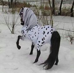 >>>Cheap Sale OFF! >>>Visit>> Appaloosa Frisian cross model I am thinking this is a model horse right? Beautiful Horse Pictures, Most Beautiful Horses, All The Pretty Horses, Animals Beautiful, Cute Horse Pictures, Horse Photos, Stunningly Beautiful, Absolutely Stunning, Funny Pictures